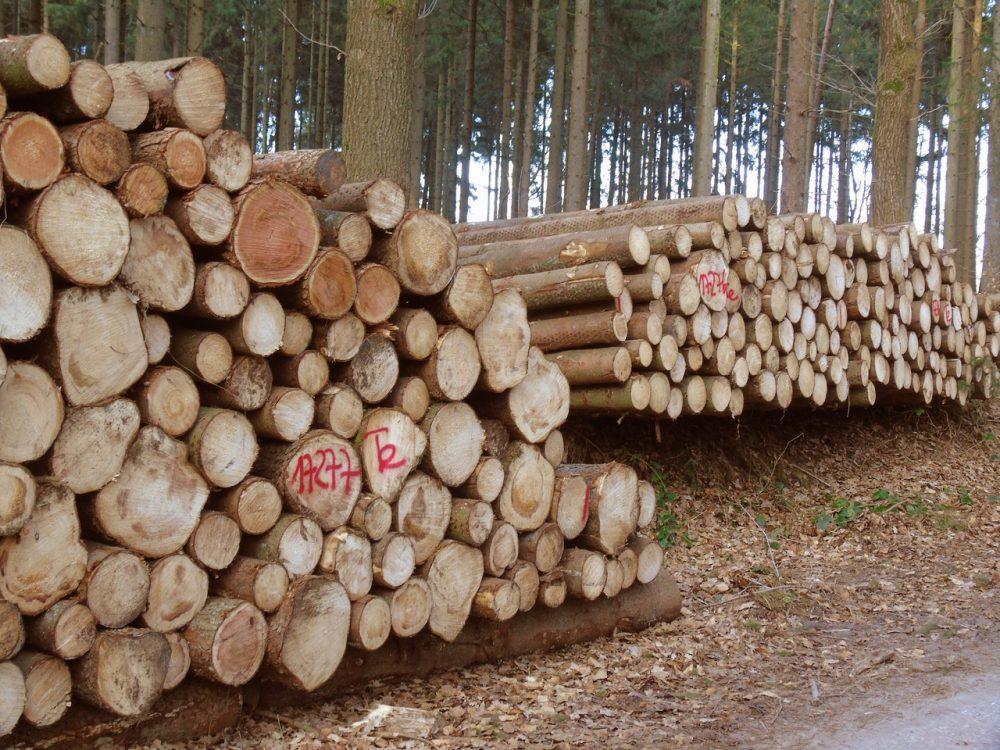 tree plant wood trunk e1519607209472